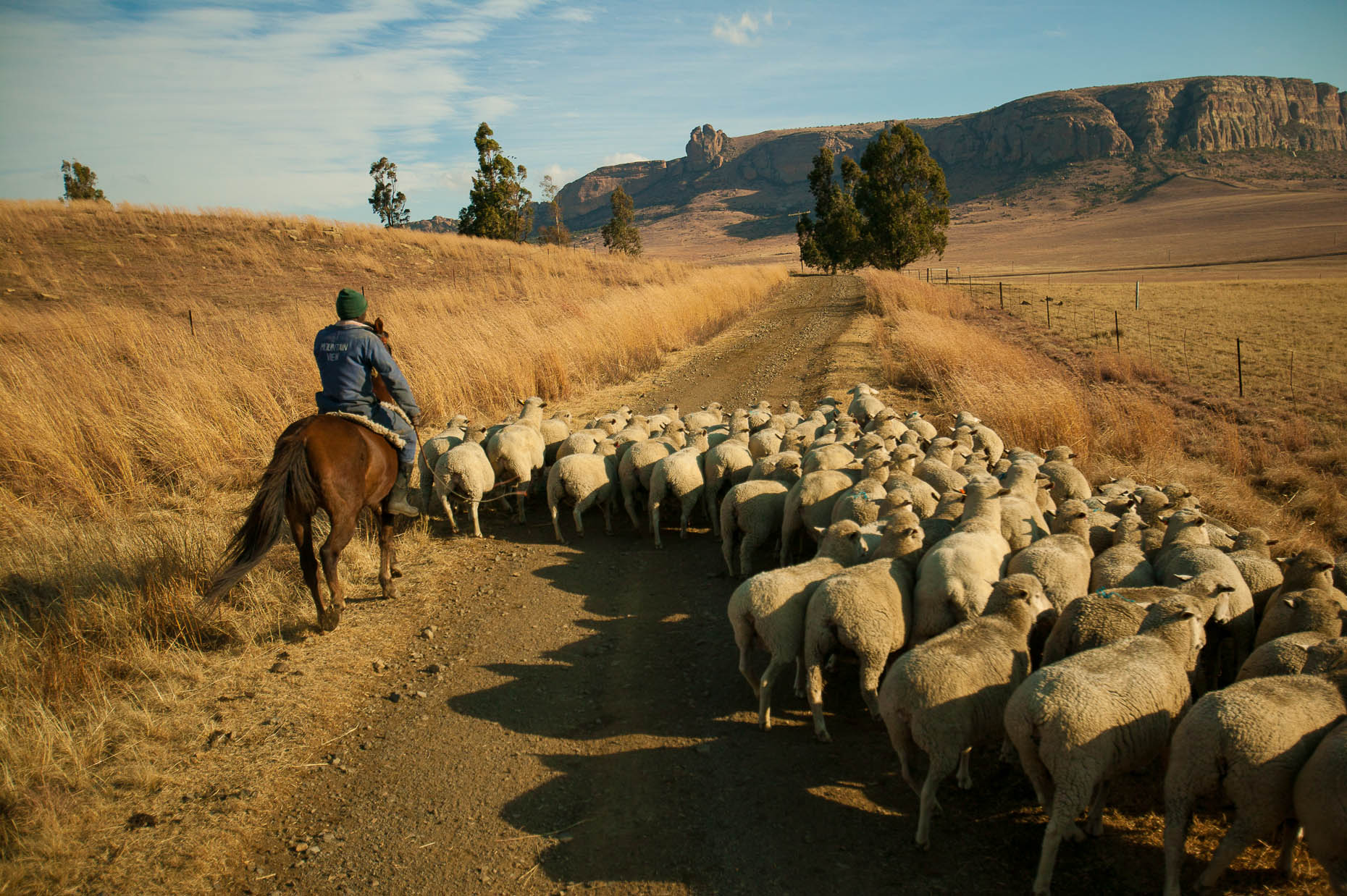 Shepherd-on-horseback-South-Africa