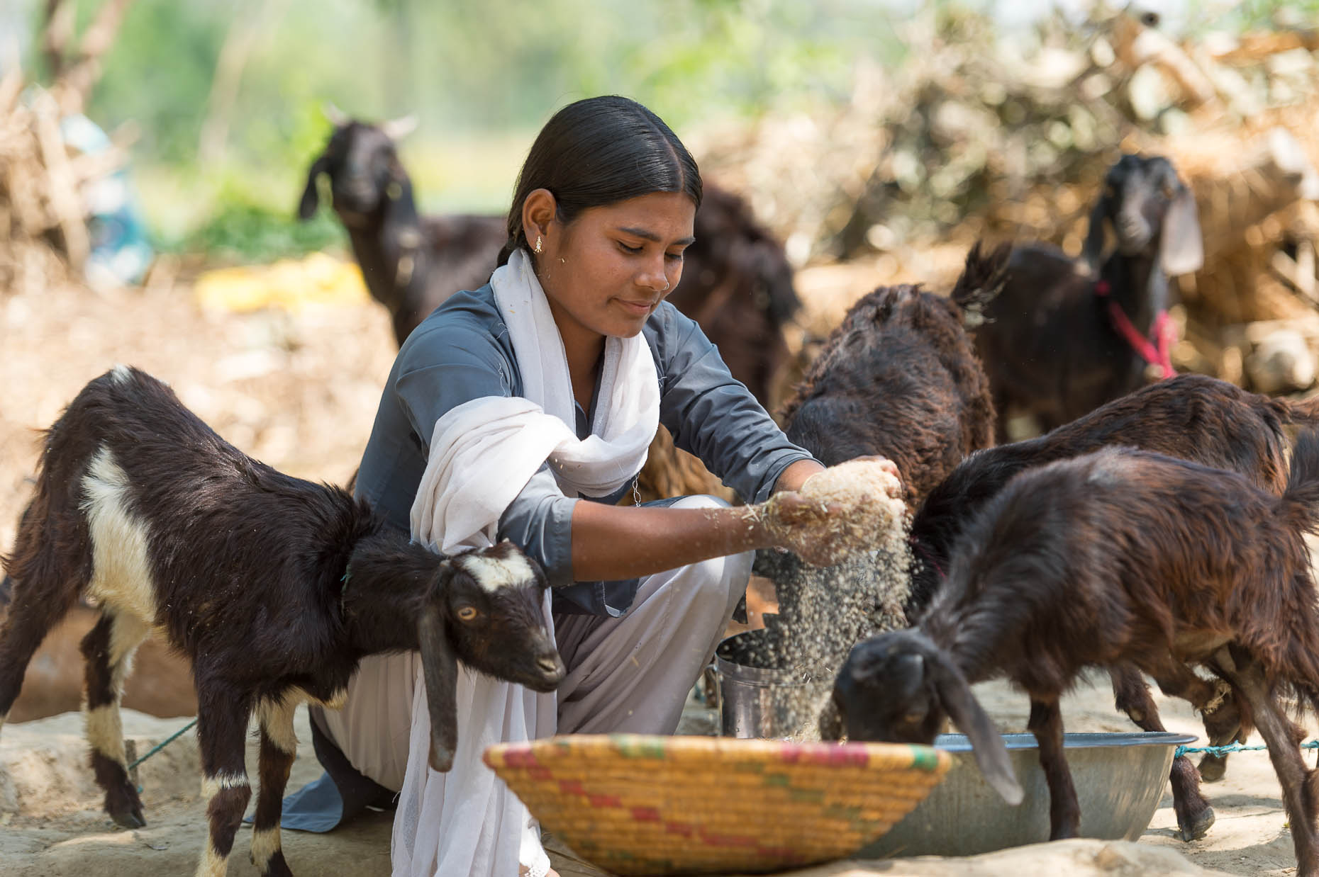 Schoolgirl-with-goats-India